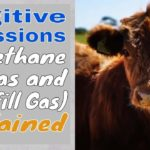 Unintended Emissions of Methane – Dangerous Secret Lurks in Natural Gas Use